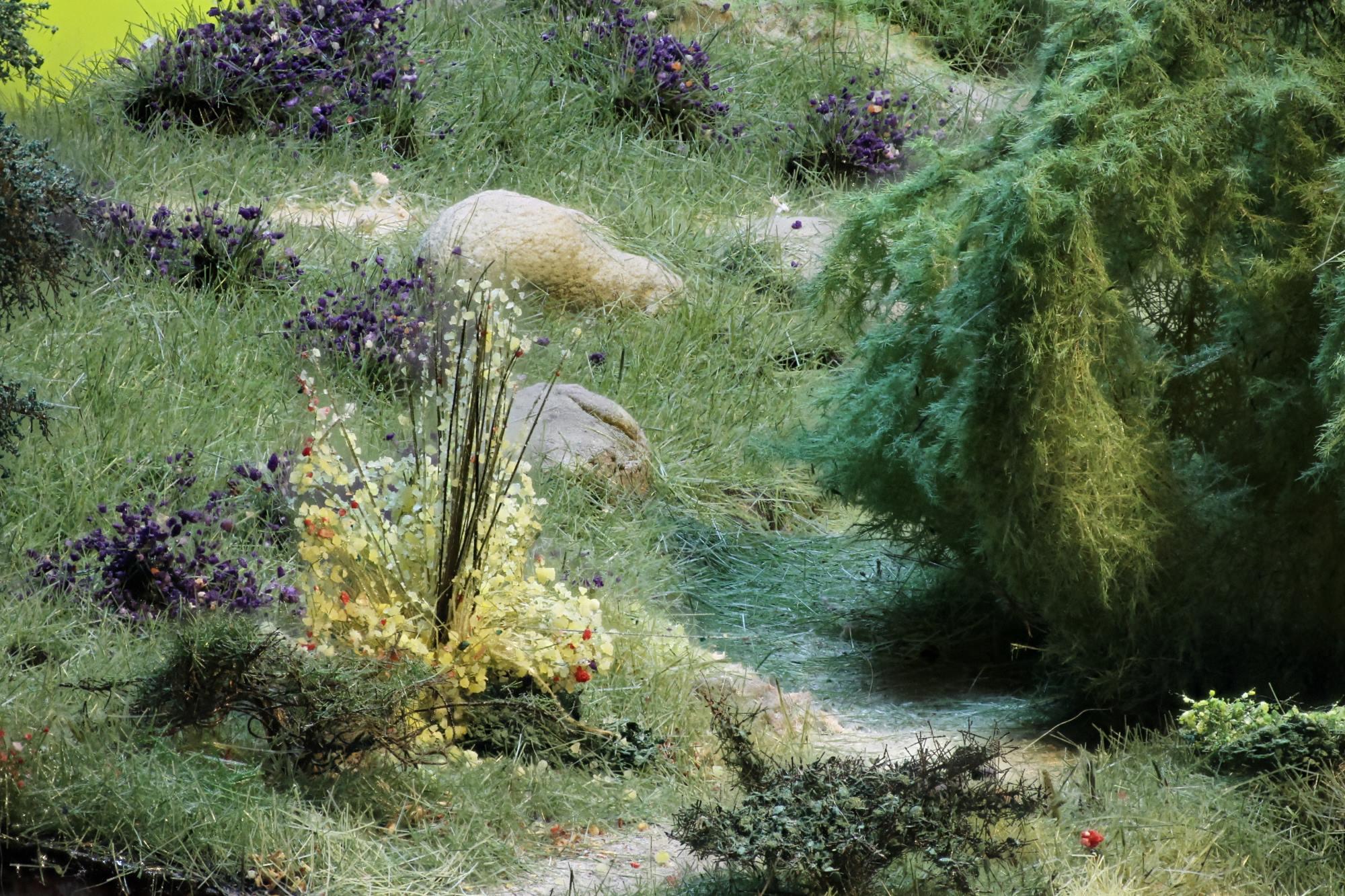 Saule, fleurs des champs N, HO, O