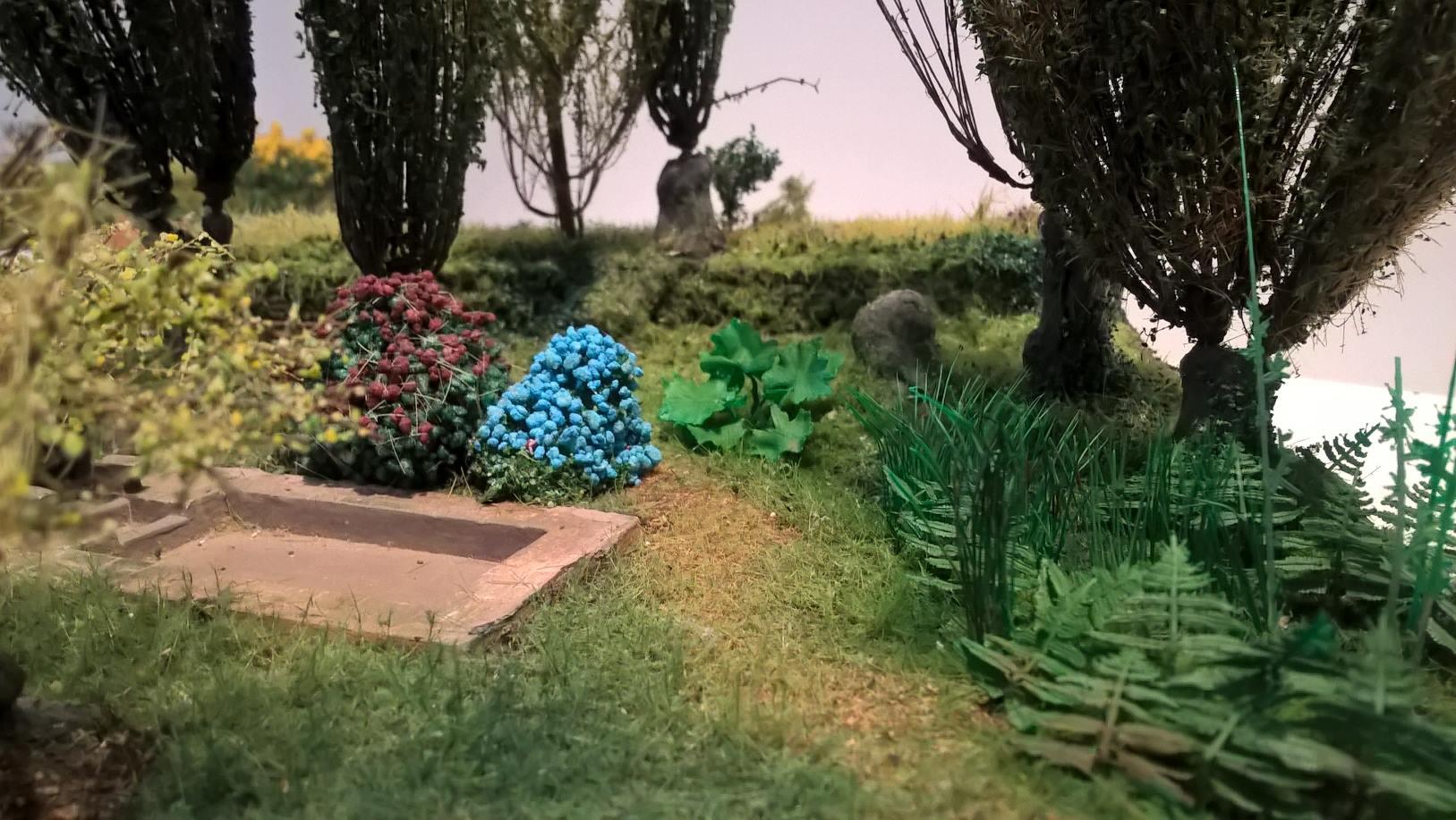 Herbes fougères roseaux Darmera_peltata_Hortensia N, HO, O