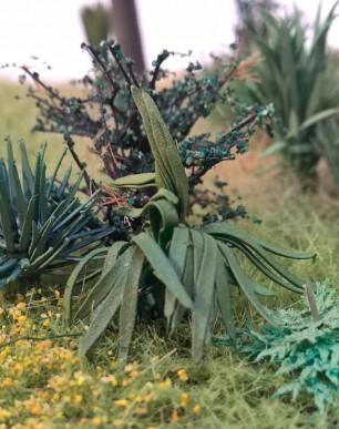 Plante exotique agave, N, HO, O